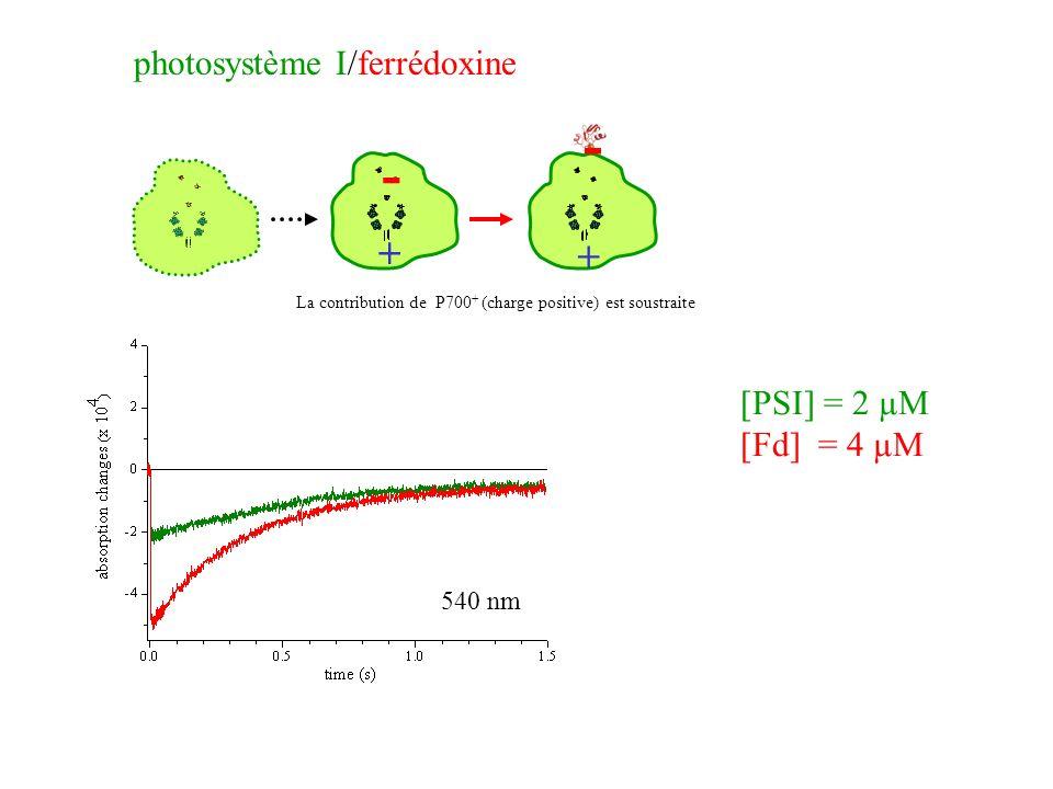 - + photosystème I/ferrédoxine [PSI] = 2 µM [Fd] = 4 µM 540 nm